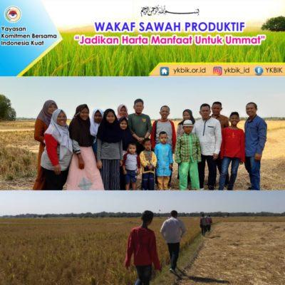 Lahan Sawah Produktif