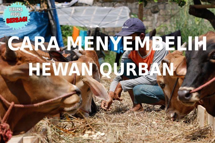 Cara Menyembelih Hewan Qurban